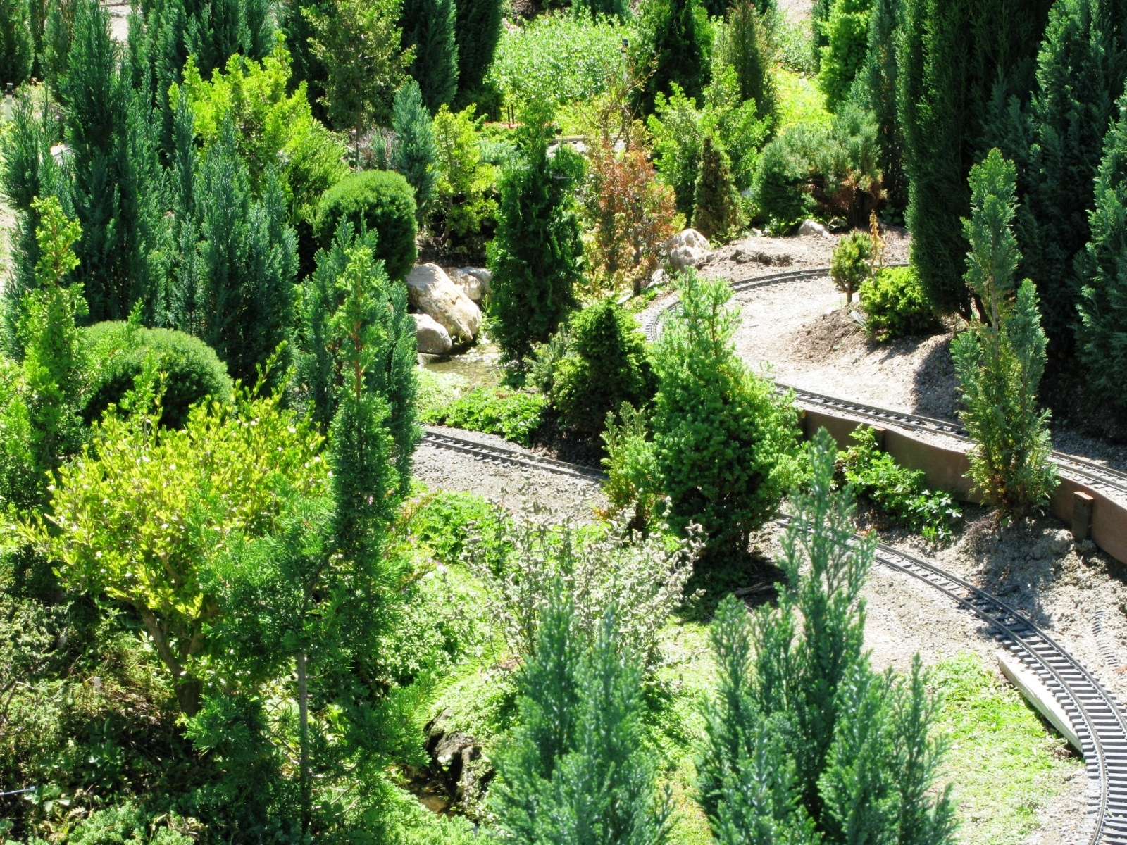ericksen Trains are lost from sight among the magnificent trees!